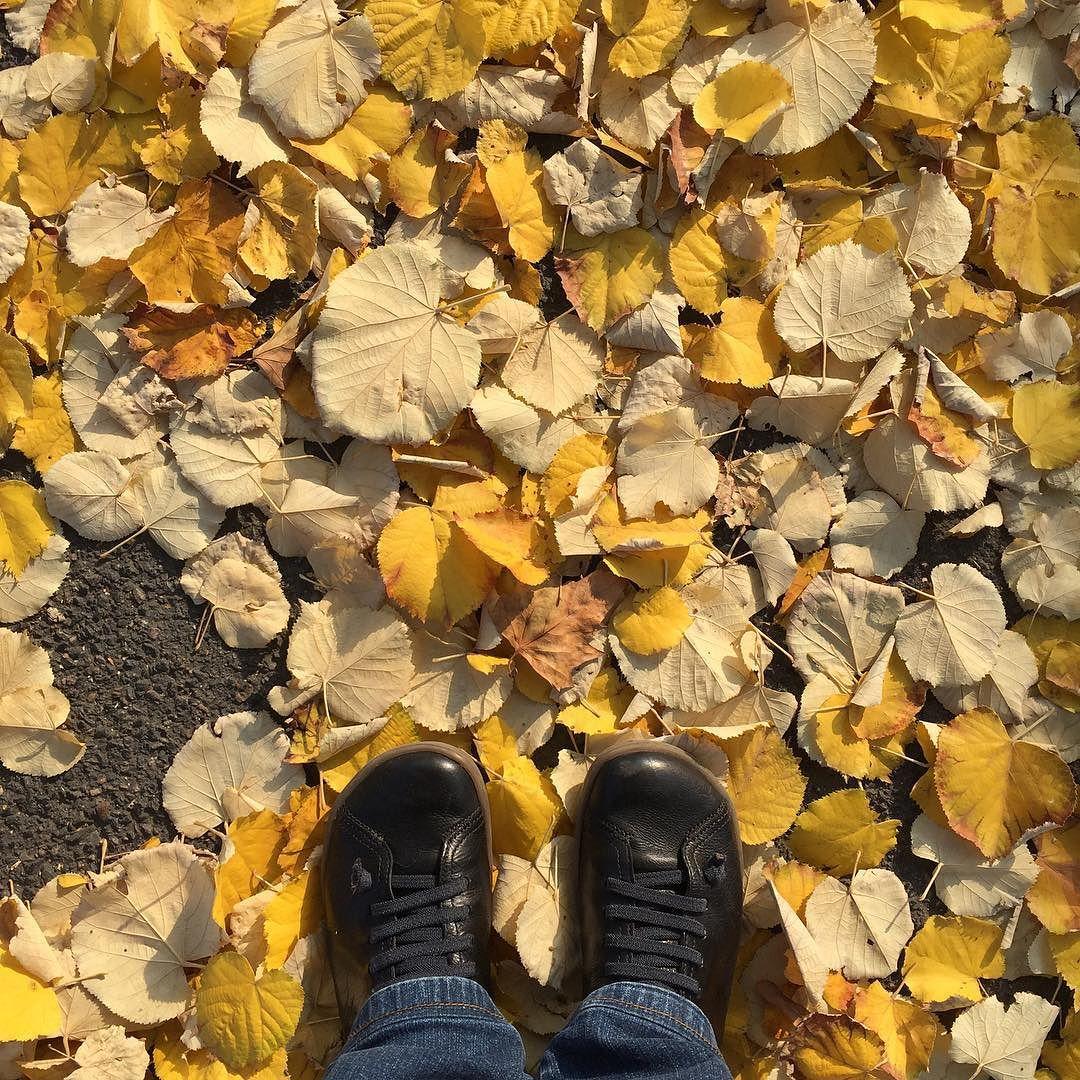 Mes chaussures en cuir entourées de feuilles mortes